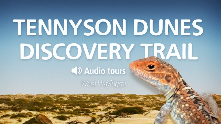 Thumbnail for Tennyson Dunes Discovery Trail
