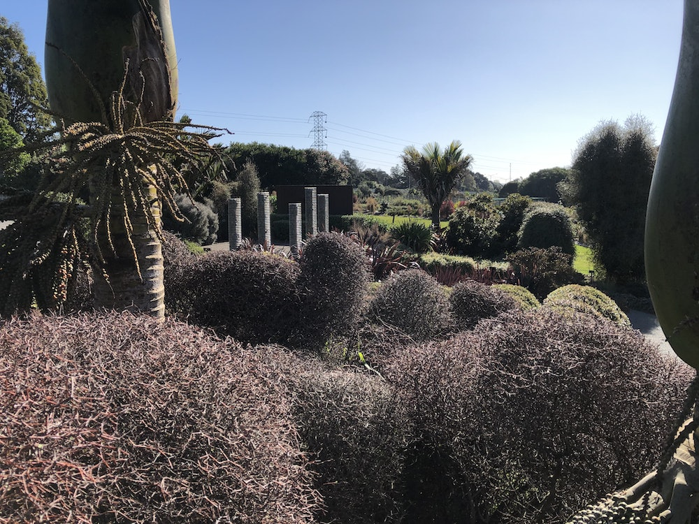 """<p><strong>Muehlenbeckia astonii</strong></p><p>The twisted habit of this plant and tactile textures and colour creates a striking effect, no matter what the season – something to consider when planning your own garden.</p><p>The different shapes and effects created by either clipped or untrained plantings of M. astonii are an absolute bonus to any Auckland garden. If you would like more information, please tap <a href=""""https://www.aucklandbotanicgardens.co.nz/plants-for-auckland/plants/muehlenbeckia-astonii/""""><strong><em>on the link</em></strong></a></p>"""