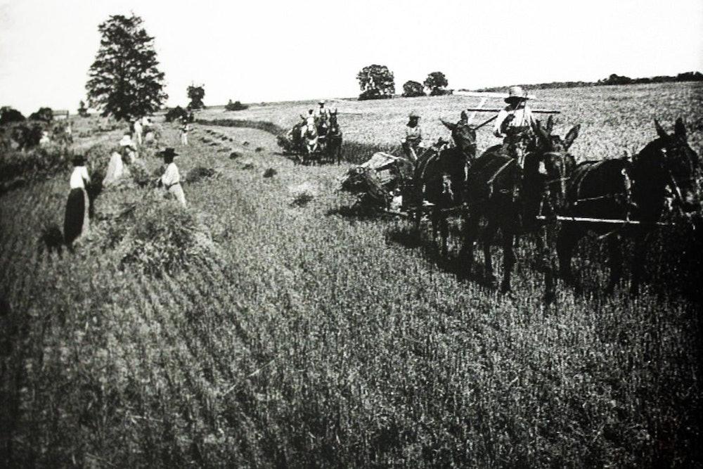 <p>Black farmers in the Gravel Hill area of Henrico.</p>