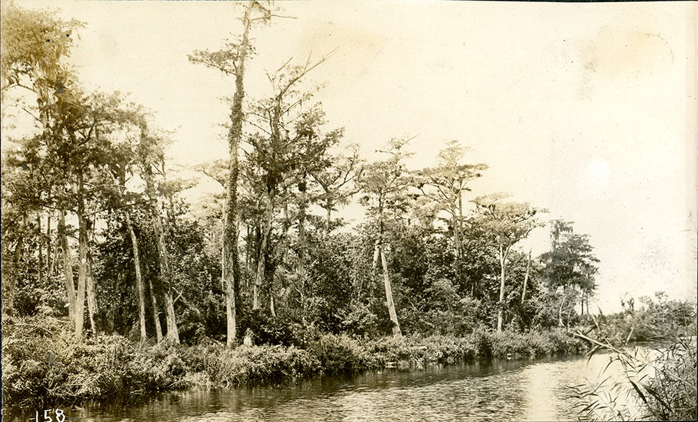 <p>Early photograph of the New River late 1800s.</p>