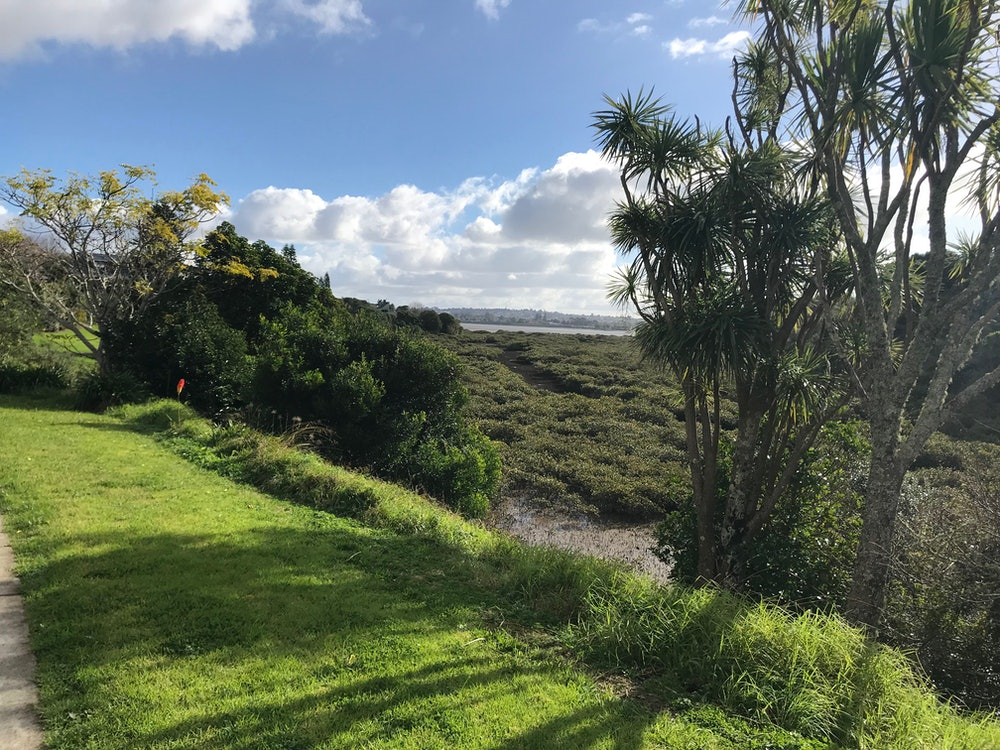 <p>In many places the shared path runs alongside mangrove inlets.</p>