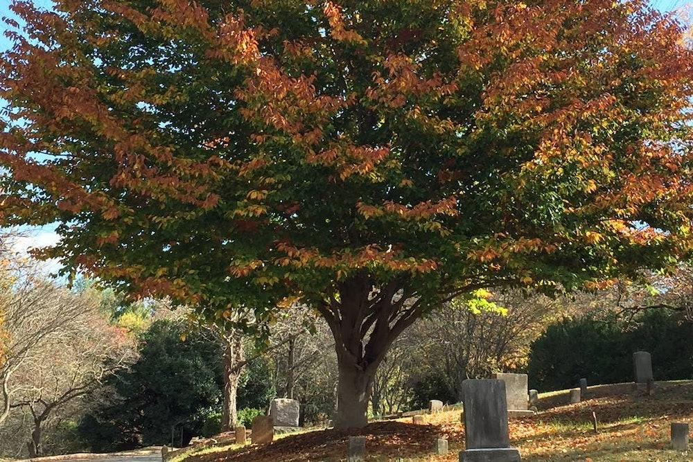 <p>Old City Cemetery</p>