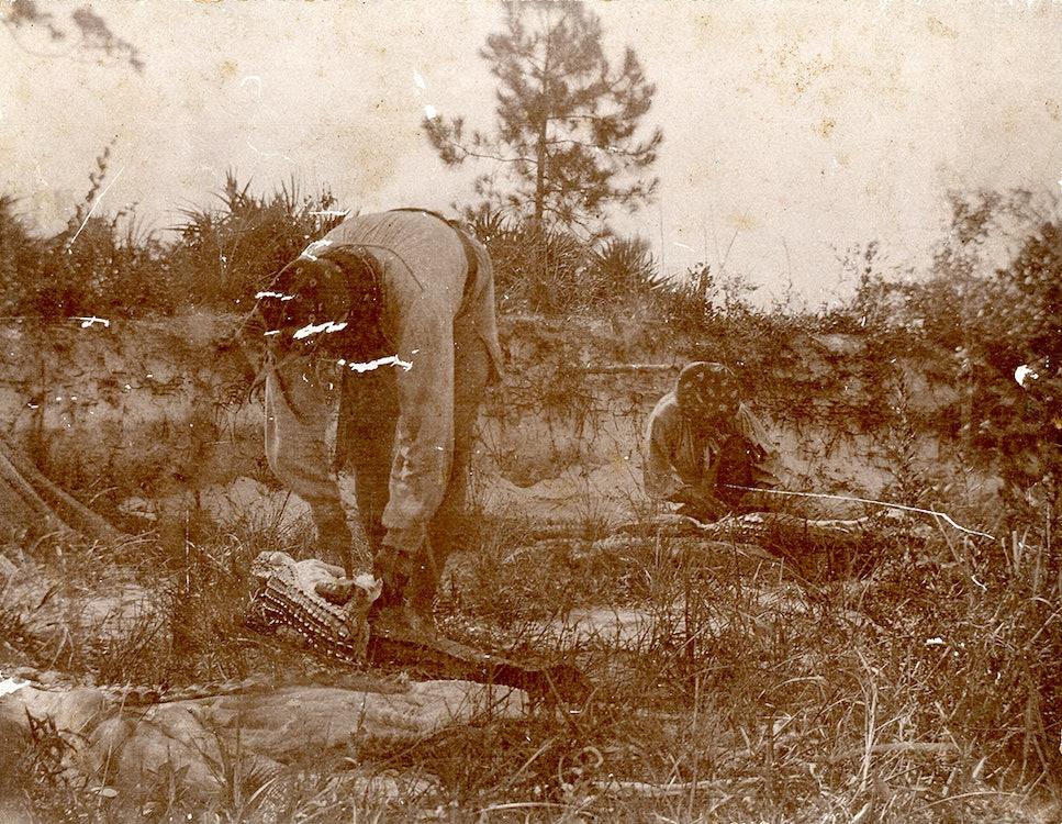 <p>Seminoles skinning alligators.</p>